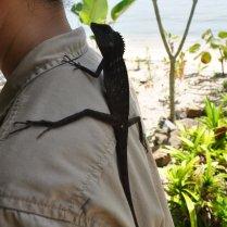 Lost chameleon