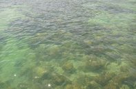 Gaya Island: Clear waters