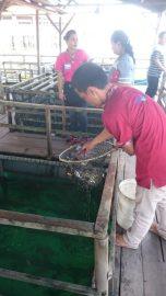 Barelang Seafood - Its alive!